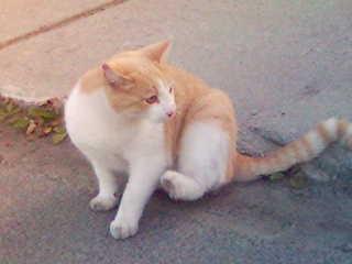 cat in Lofoten.jpg